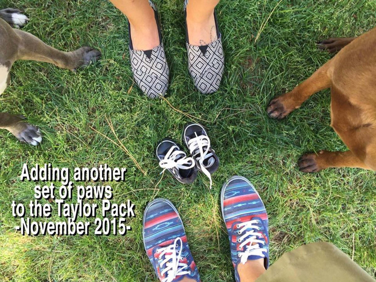50 Adorable Dogs Who Shared Their Familys Pregnancy News In The – Baby Announcement Ideas to Family