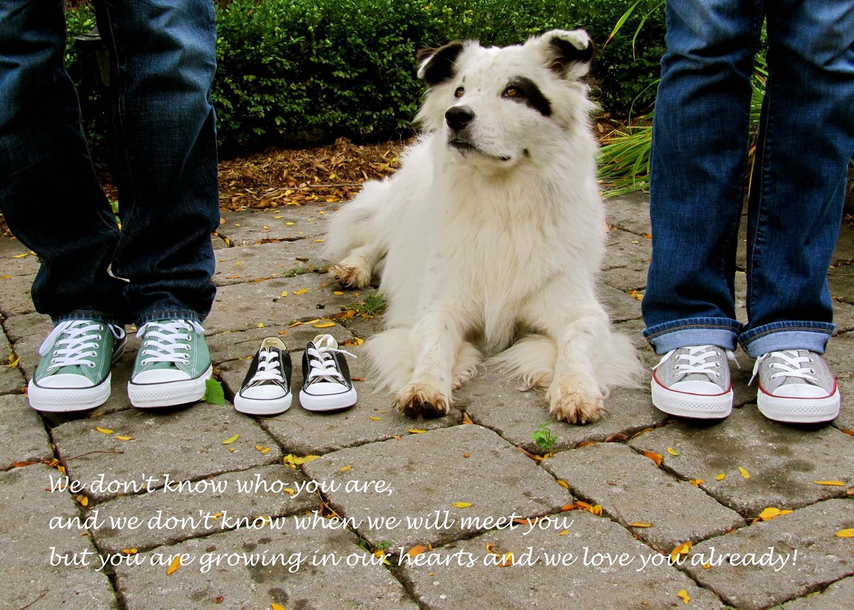 Adorable Dogs Who Shared Their Familys Pregnancy News In The - 30 animals cutest parents