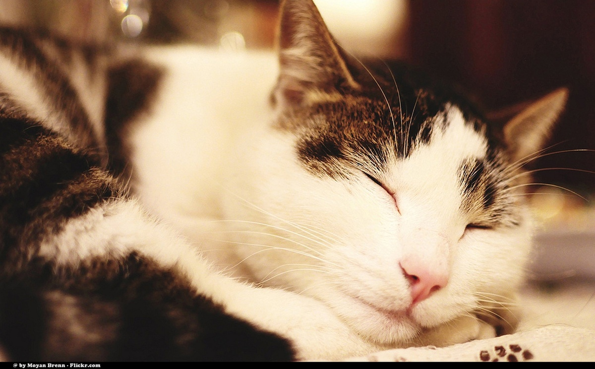 """Cat Sleeping cat of my cousin on the table   <b>Visit my travel blog  <a href=""""http://earthincolors.wordpress.com"""" rel=""""nofol"""