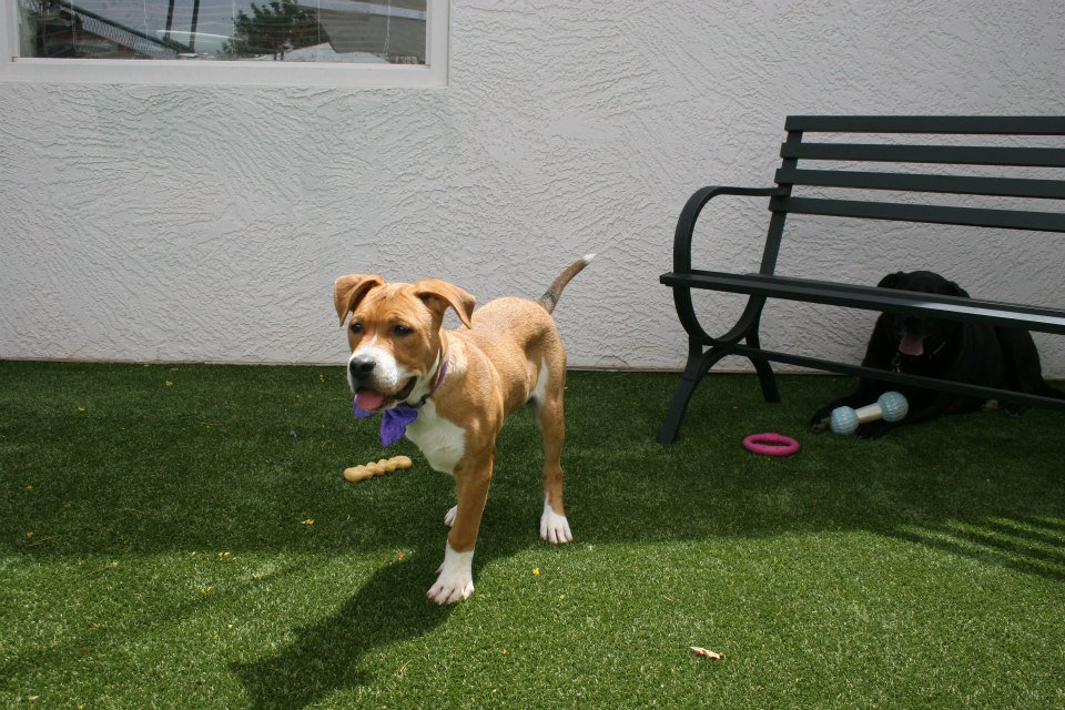 Dogs (not residents of the shelter) showing off Sojourner Center's new shelter for pets.