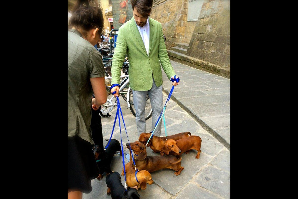 Doggie flash mob courtesy of Harmont & Blaine