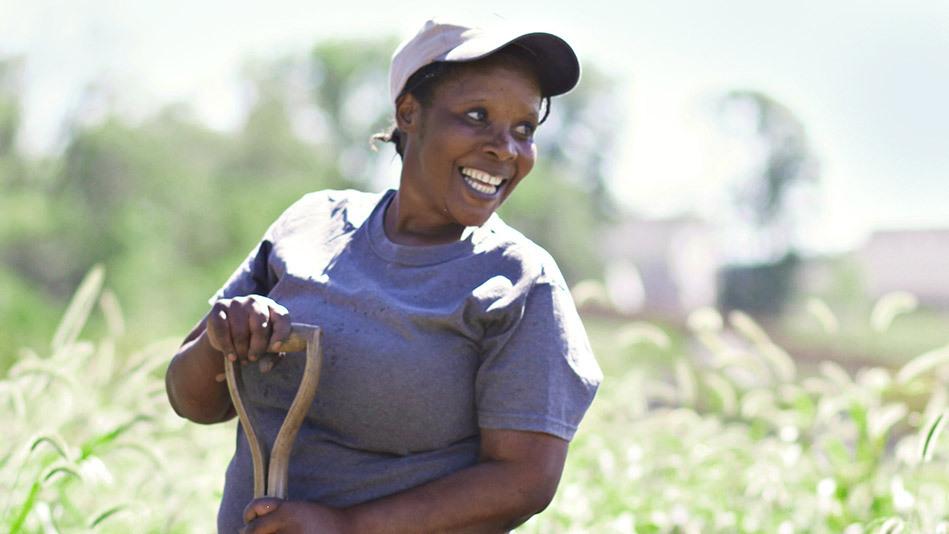 Angelique Hakuzimana digs up sweet potatoes in Granger, Iowa.