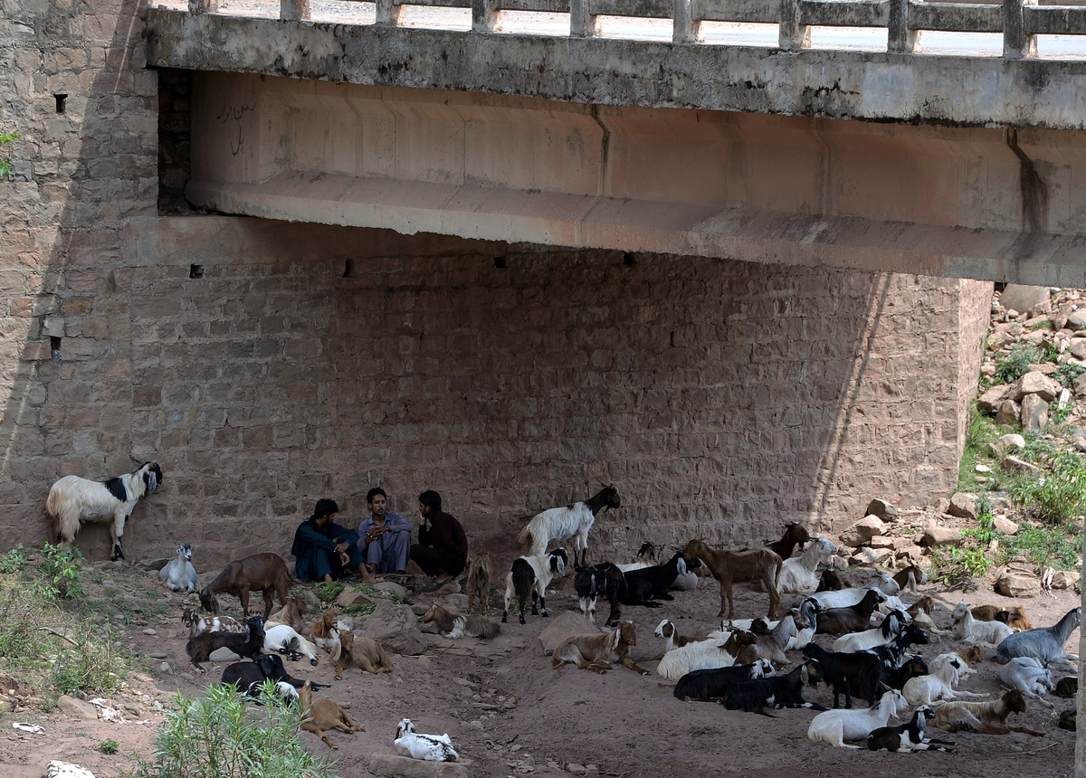 Pakistani men sit with their animals under a bridge during a heatwave on the outskirts of Islamabad on June 22, 2015. (AAMIR