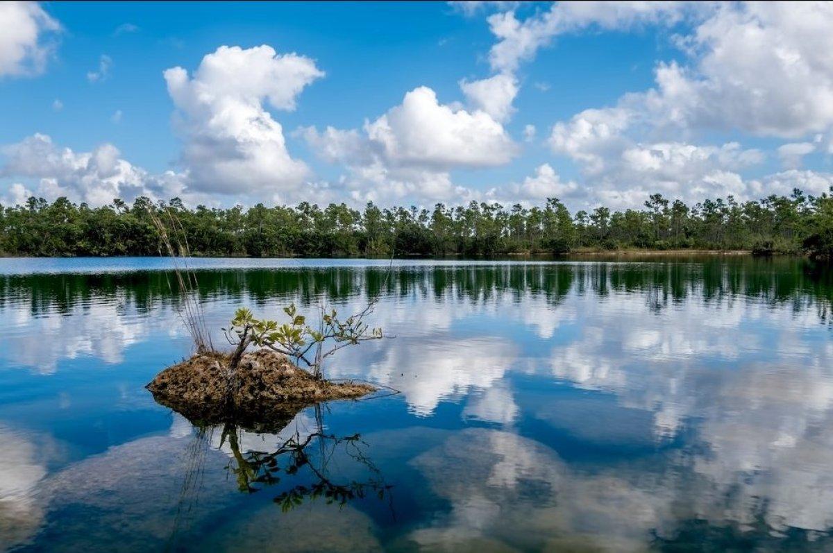 "<strong>Everglades, Florida</strong> Explore Florida's wild side on an <a href=""http://evergladesadventuretours.net/everglad"