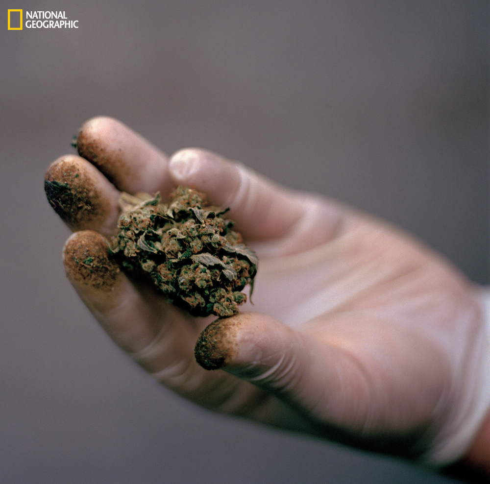 Marijuana's advocates believe the long-maligned plant can enhance life—and help deliver people from sickness and pain. A Seat