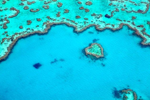 Extendiéndose por más de 1,860 millas sobre la costa noreste de Australia, es hogar de la más grande red de arrecifes de cora