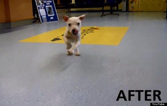wonky puppy