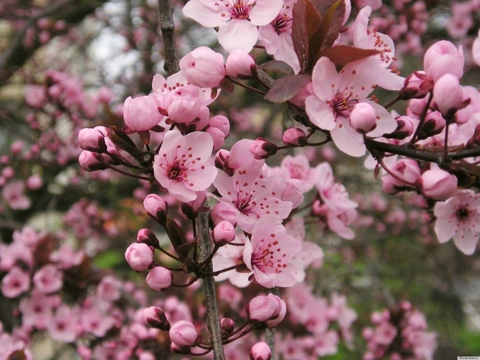 Beautiful early blooming spring flowers that are just as anxious for beautiful early blooming spring flowers that are just as anxious for the season as we are photos huffpost mightylinksfo