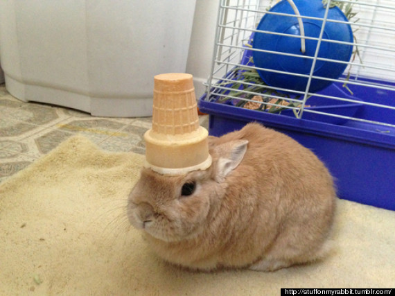 stuff on my rabbit vinnie