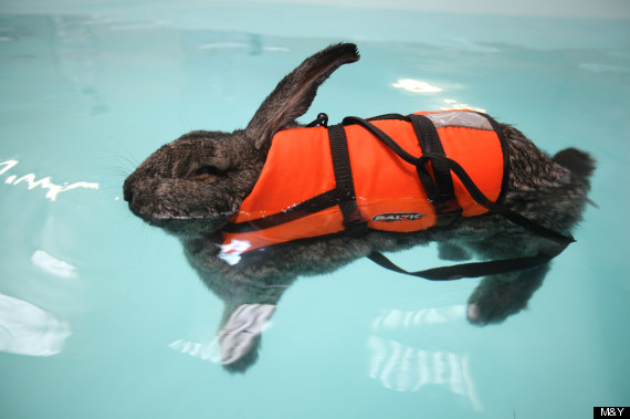 heidi swimming rabbit