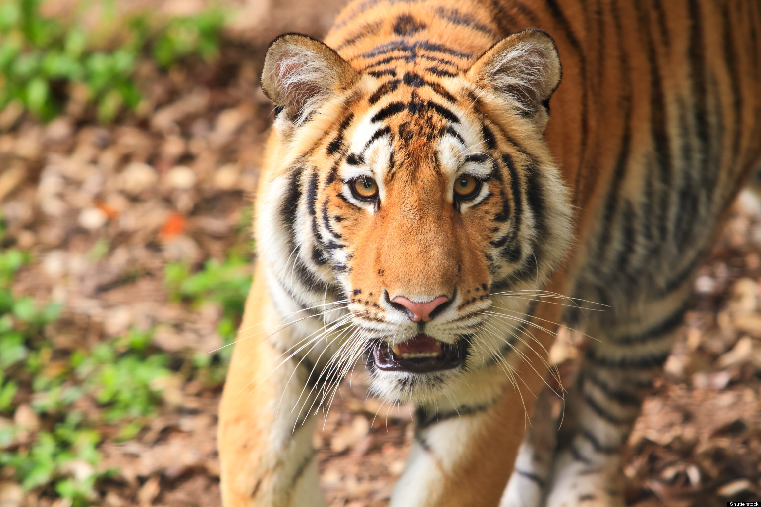 The 10 Best Places To See Wild Animals   HuffPost