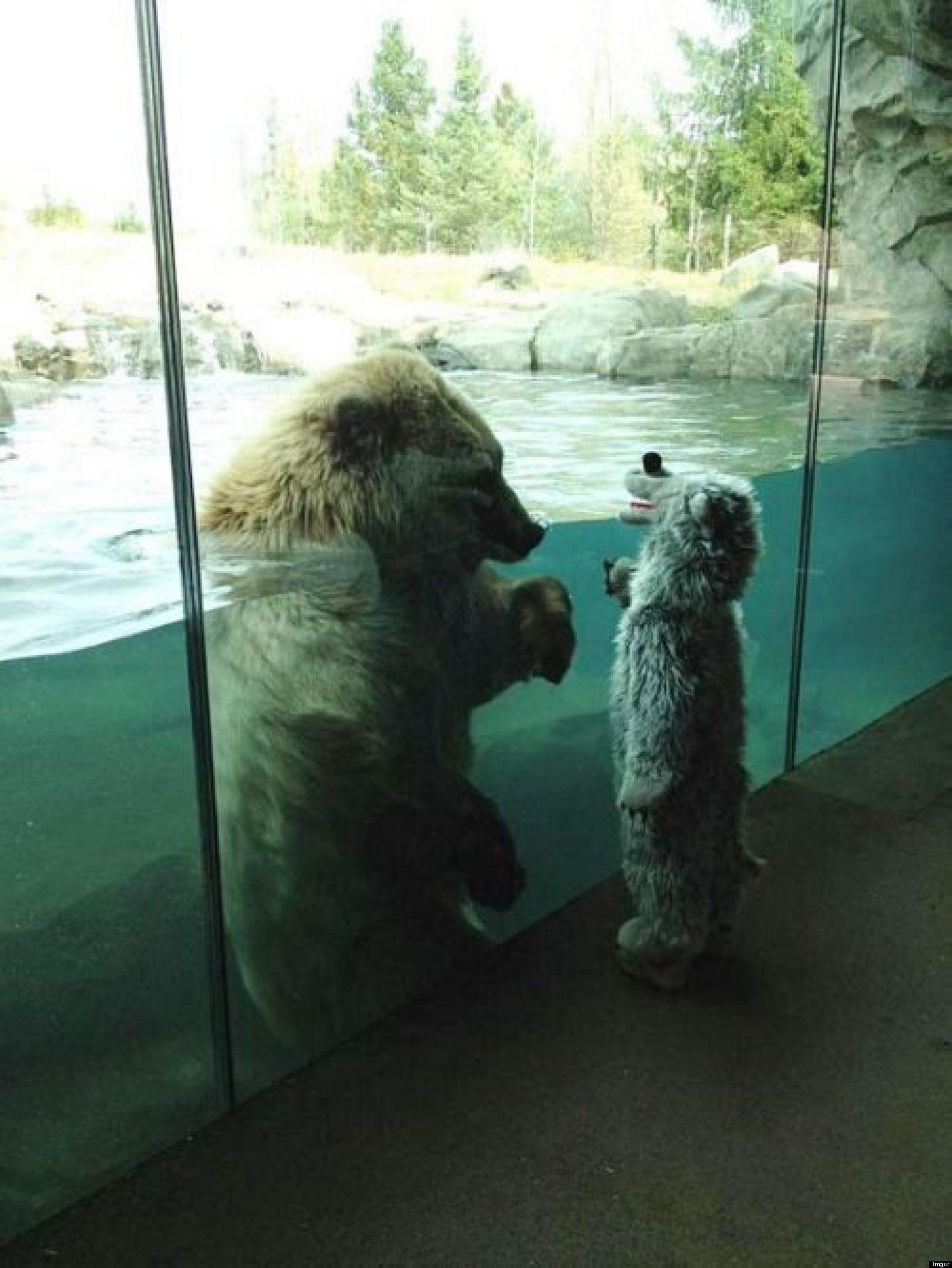Bear Meets Kid Wearing Bear Costume At The Minnesota Zoo (PHOTO)   HuffPost & Bear Meets Kid Wearing Bear Costume At The Minnesota Zoo (PHOTO ...