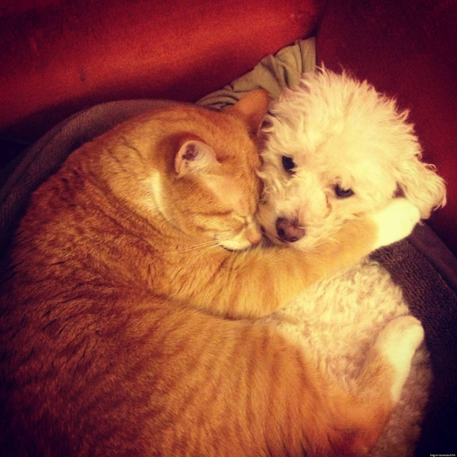 Rescued Cats Hugging