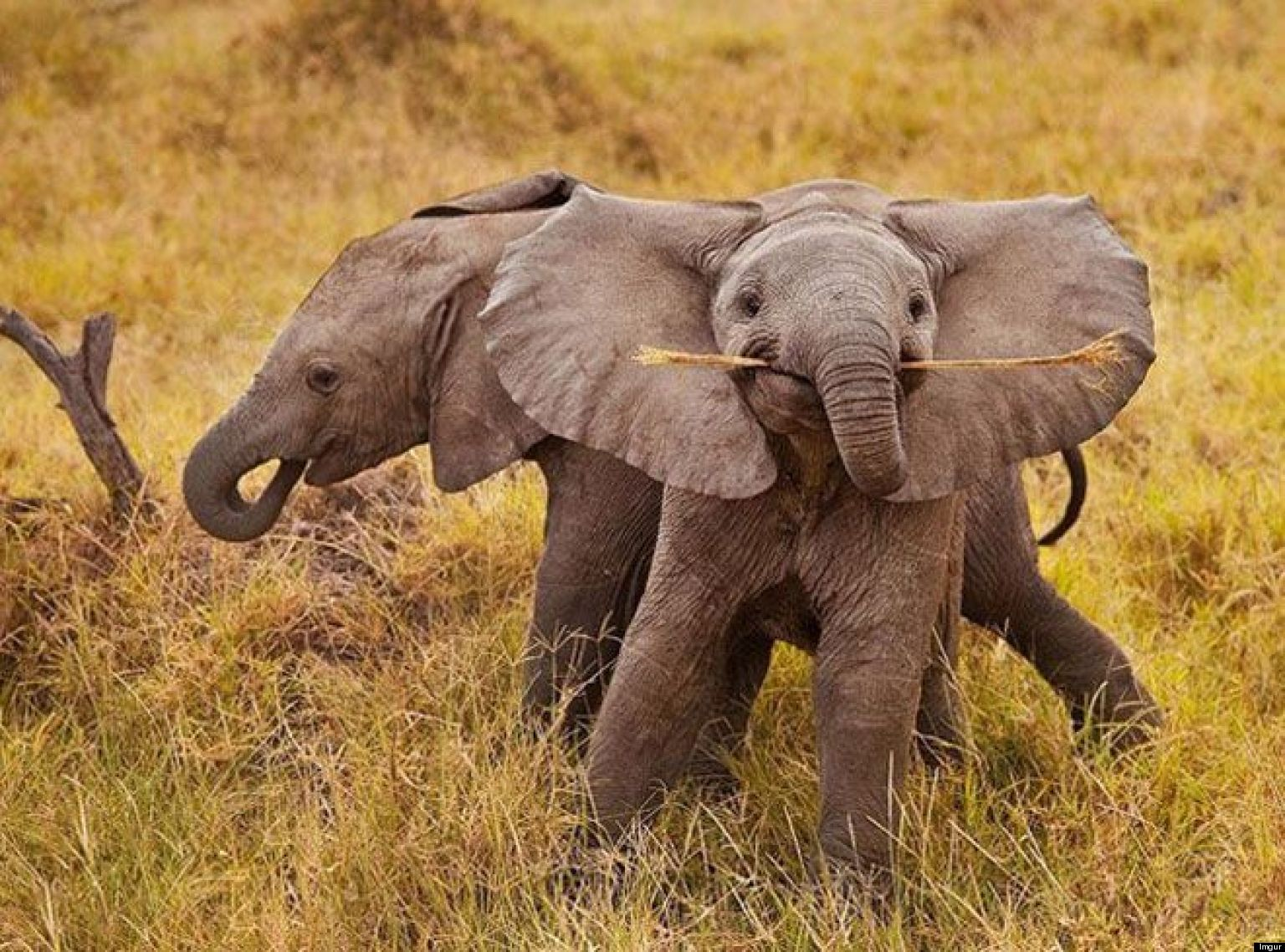 Smiling Baby Elephant Is The Cutest (PHOTO) | HuffPost