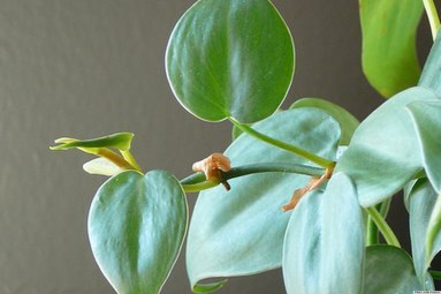 10 best houseplants to de stress your home and purify the air huffpost - House Plants Vines