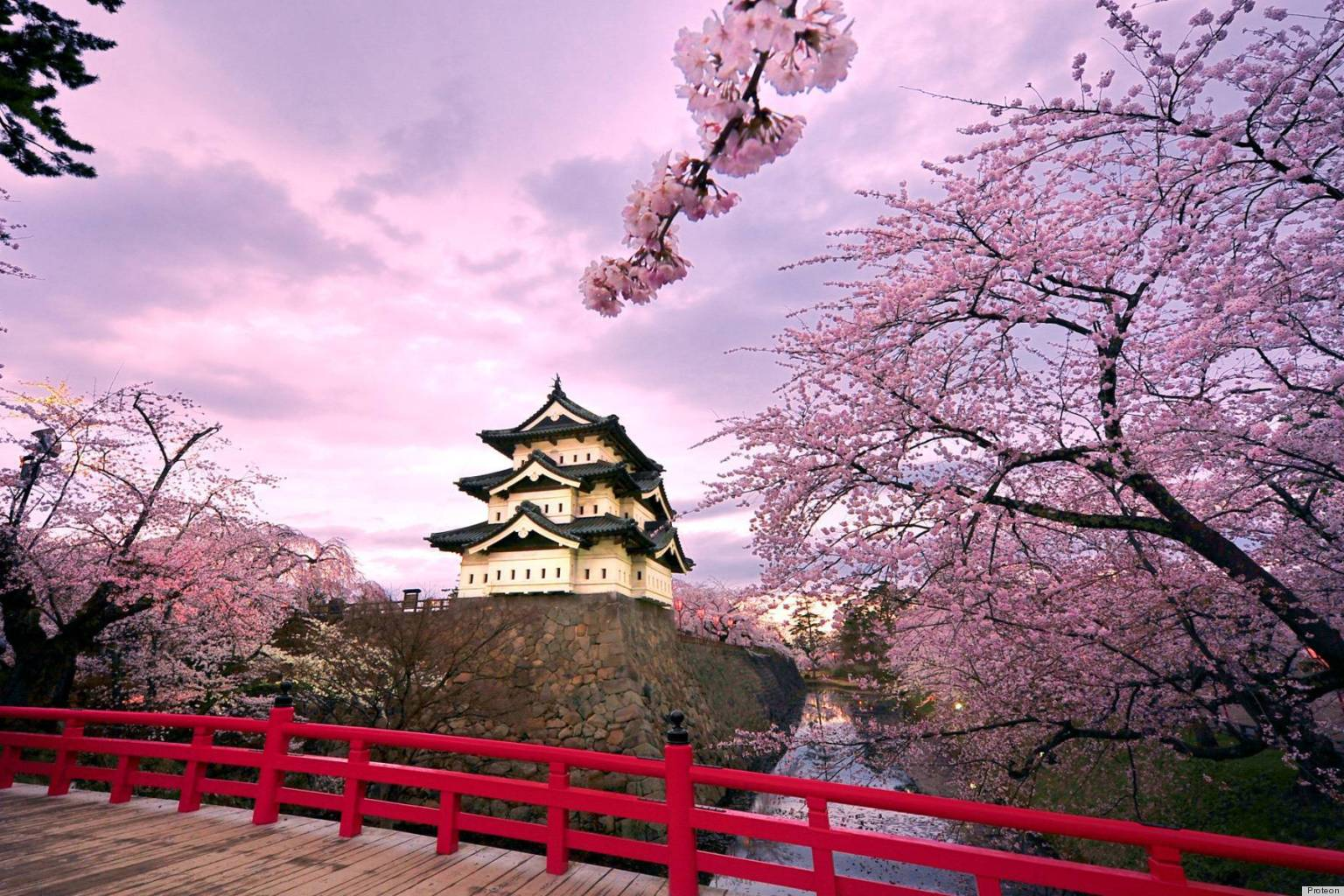 o-CHERRY-BLOSSOM-TREE-JAPAN-facebook.jpg