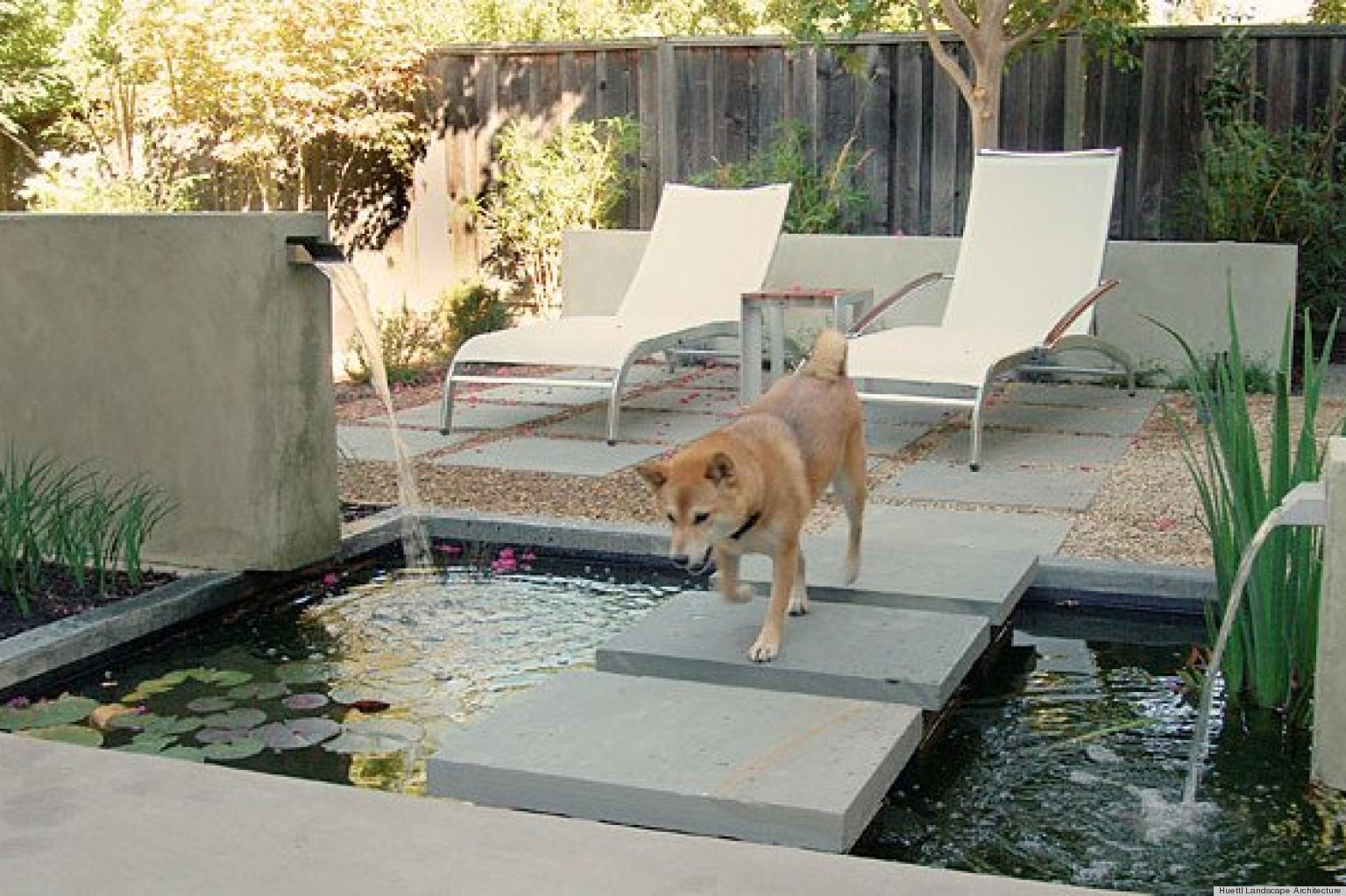 Backyard Dogs 8 backyard ideas to delight your dog | huffpost