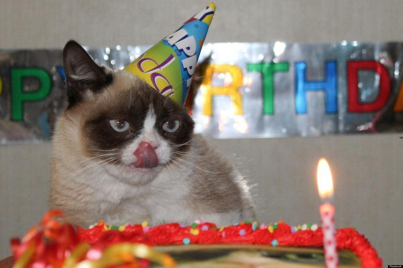 Grumpy cat celebrates her first birthday photos huffpost bookmarktalkfo Image collections