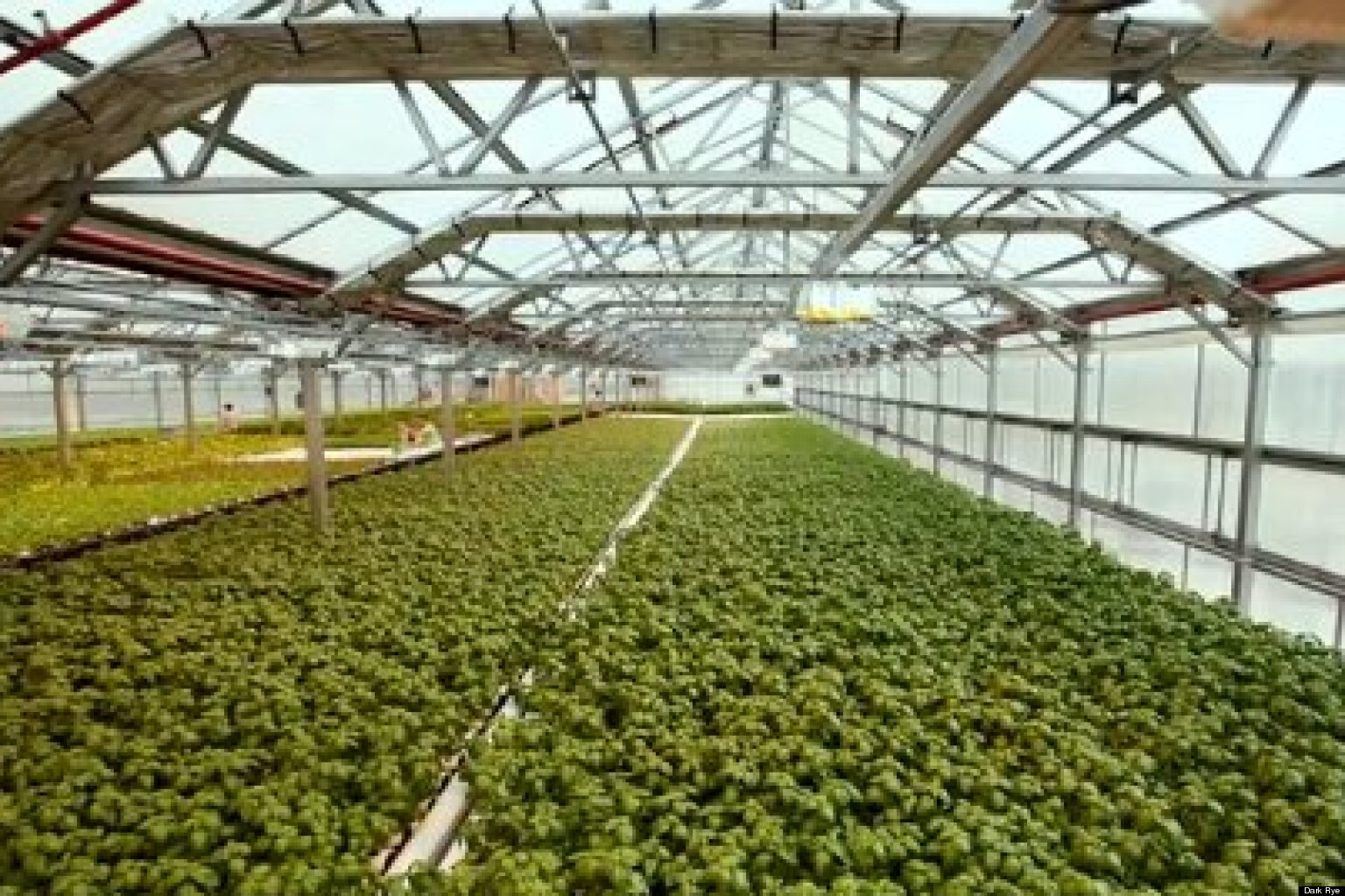 Gotham Greens Rooftop Farming In New York City Huffpost