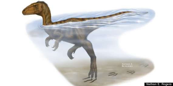 dinosaurs in the water alberta research
