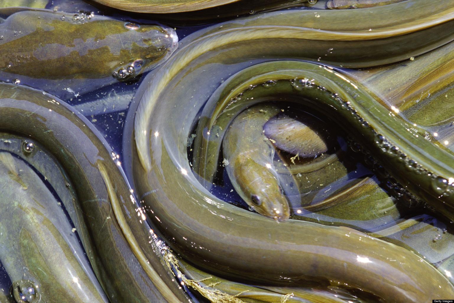 Asian woman fuck eel — photo 1