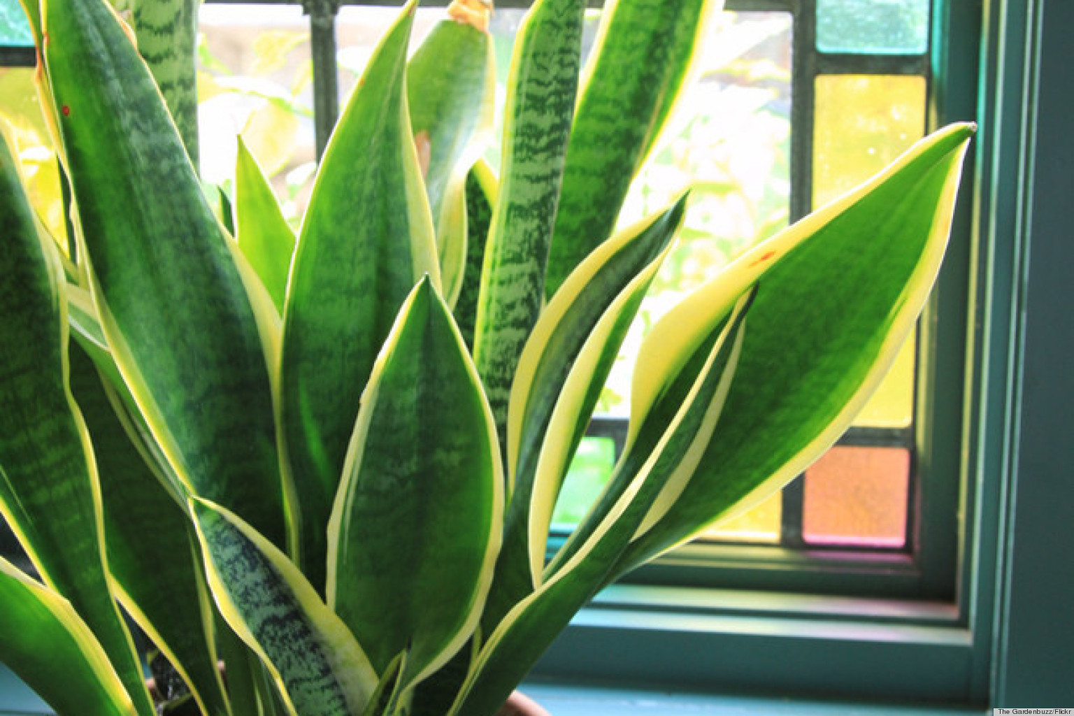 Caring For Tropical Plants Part - 26: 6 Houseplants That Are Low-Maintenance And Easy To Care For (PHOTOS) |  HuffPost