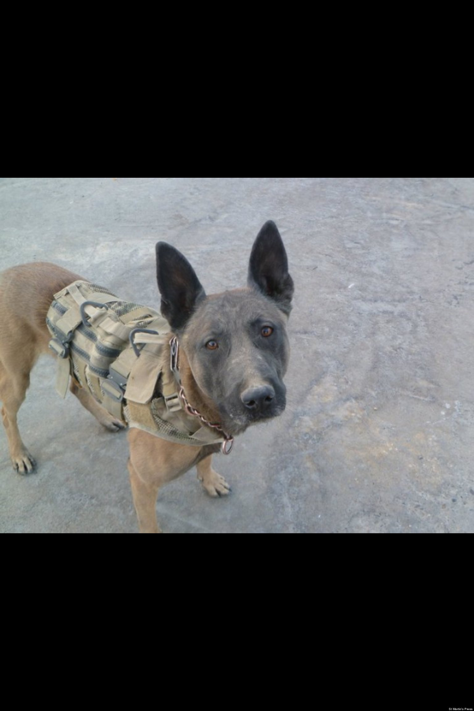 Amazing War Army Adorable Dog - o-HISTORY-OF-WAR-DOGS-facebook  Best Photo Reference_48775  .jpg