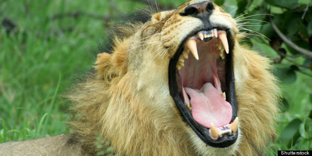 Lion Tacos Stir Controversy At Taco Fusion Eatery In Florida