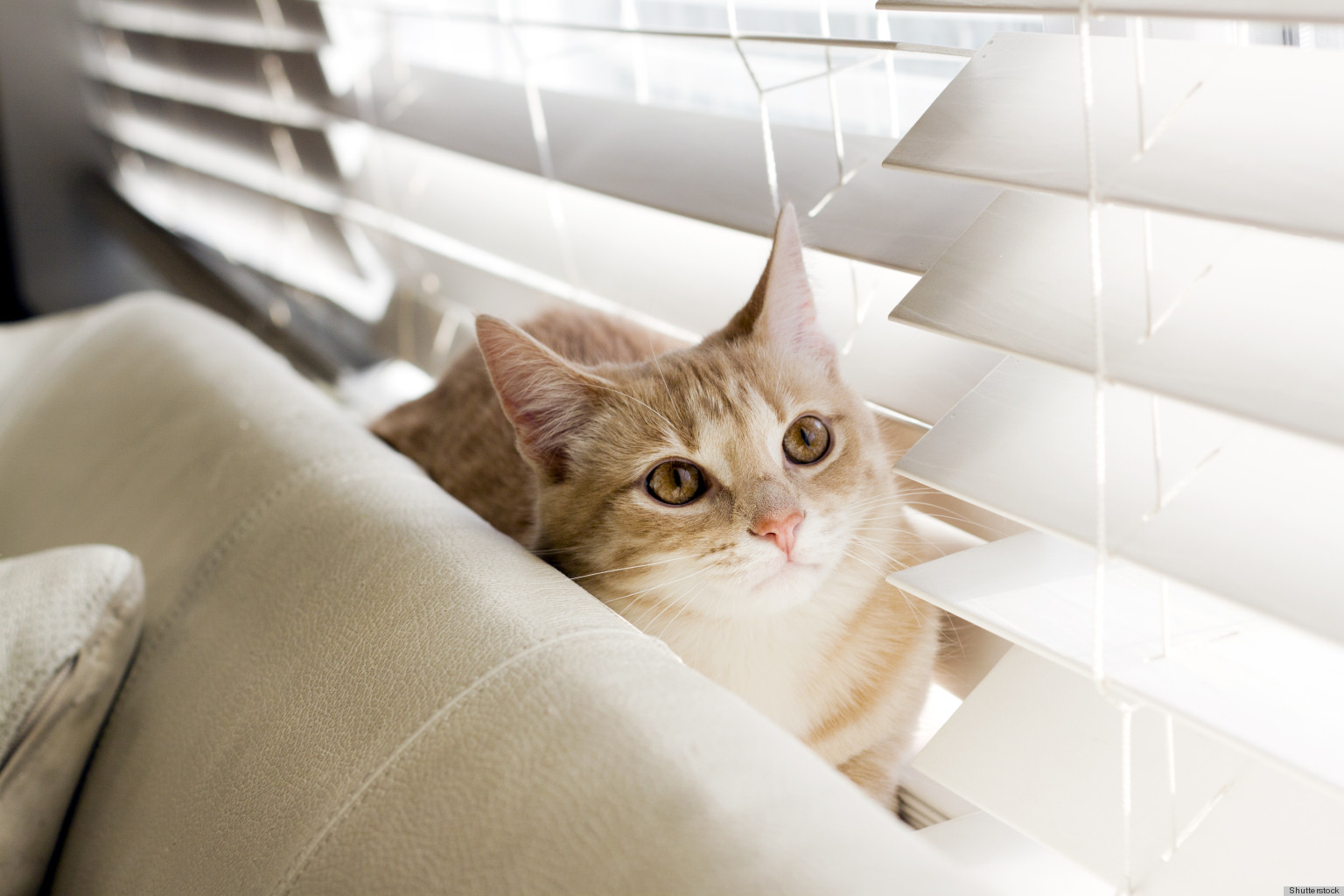 Cat friendly decor or how to fool everyone into thinking that cat friendly decor or how to fool everyone into thinking that you dont own a cat photos huffpost reviewsmspy