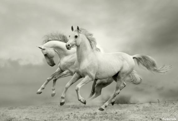 cavallo del vento