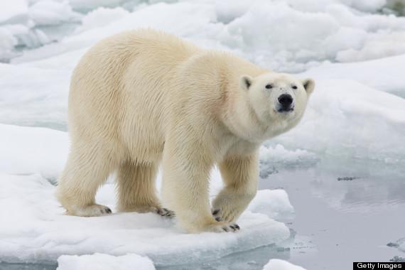 svalbard polar