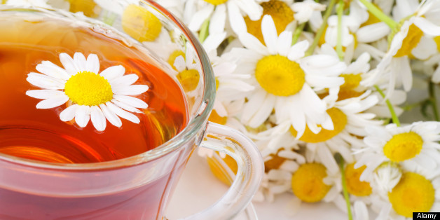 Could camomile tea protect your body from spread of cancer?