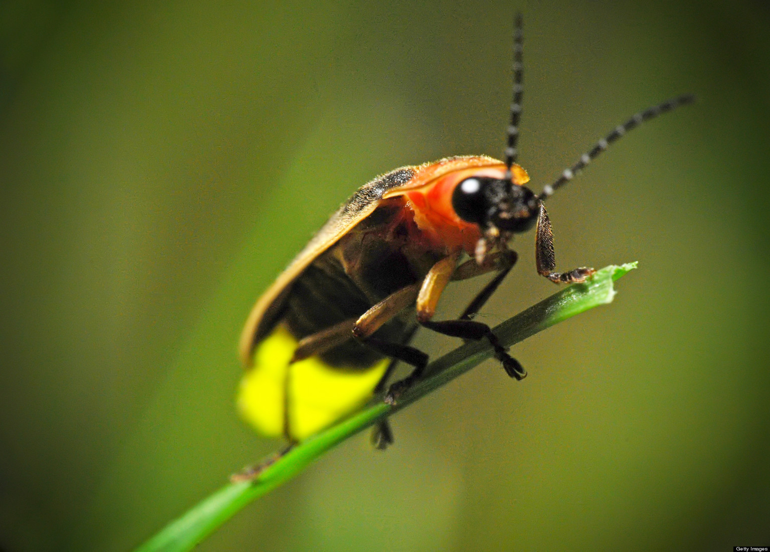 Weve been studying bugs and insects this summer and one creature my boys have been so interested in lately are fireflies! They really are fascinating insects and