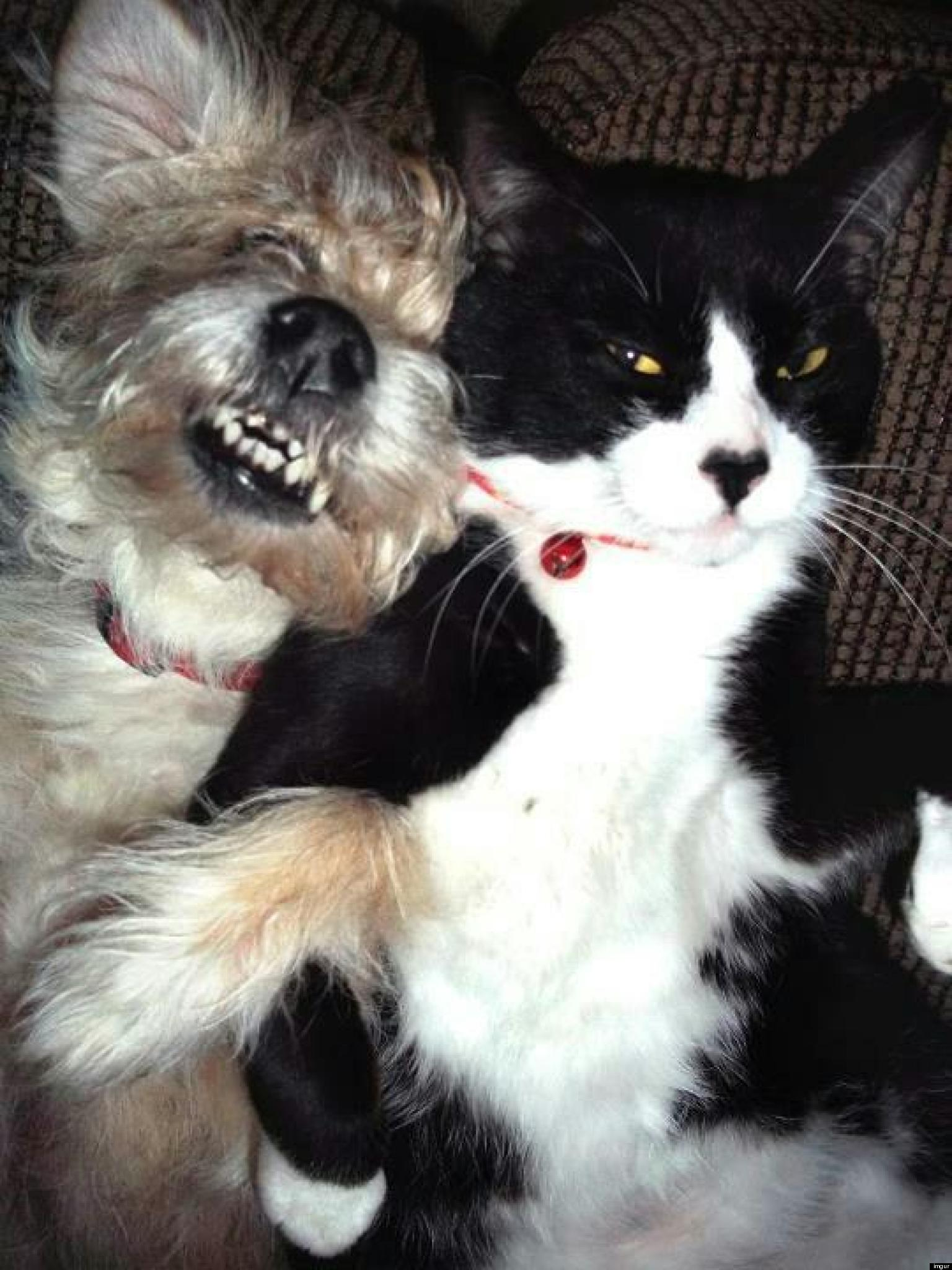 Cat Dog Best Friends Have An Adorable Love Hate Moment PHOTO