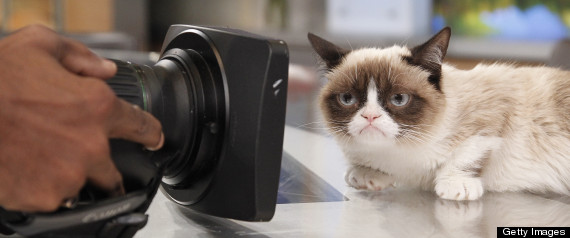 Grumpy cat gets a movie deal thecheapjerseys Choice Image