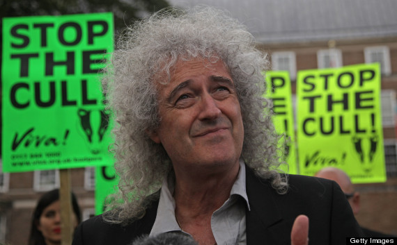 badger cull brian may