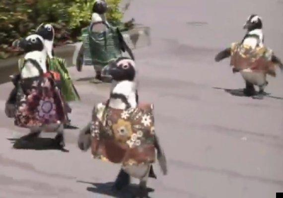 penguins african dress