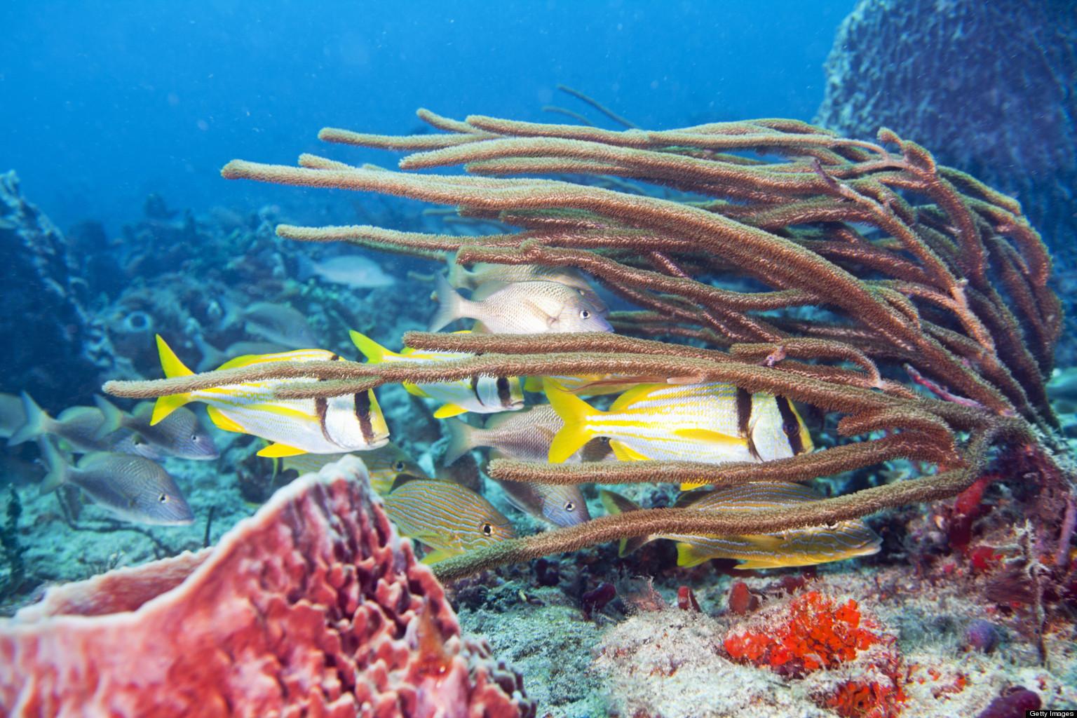 Florida coral reef conservation program seeks input via for Florida reef fish