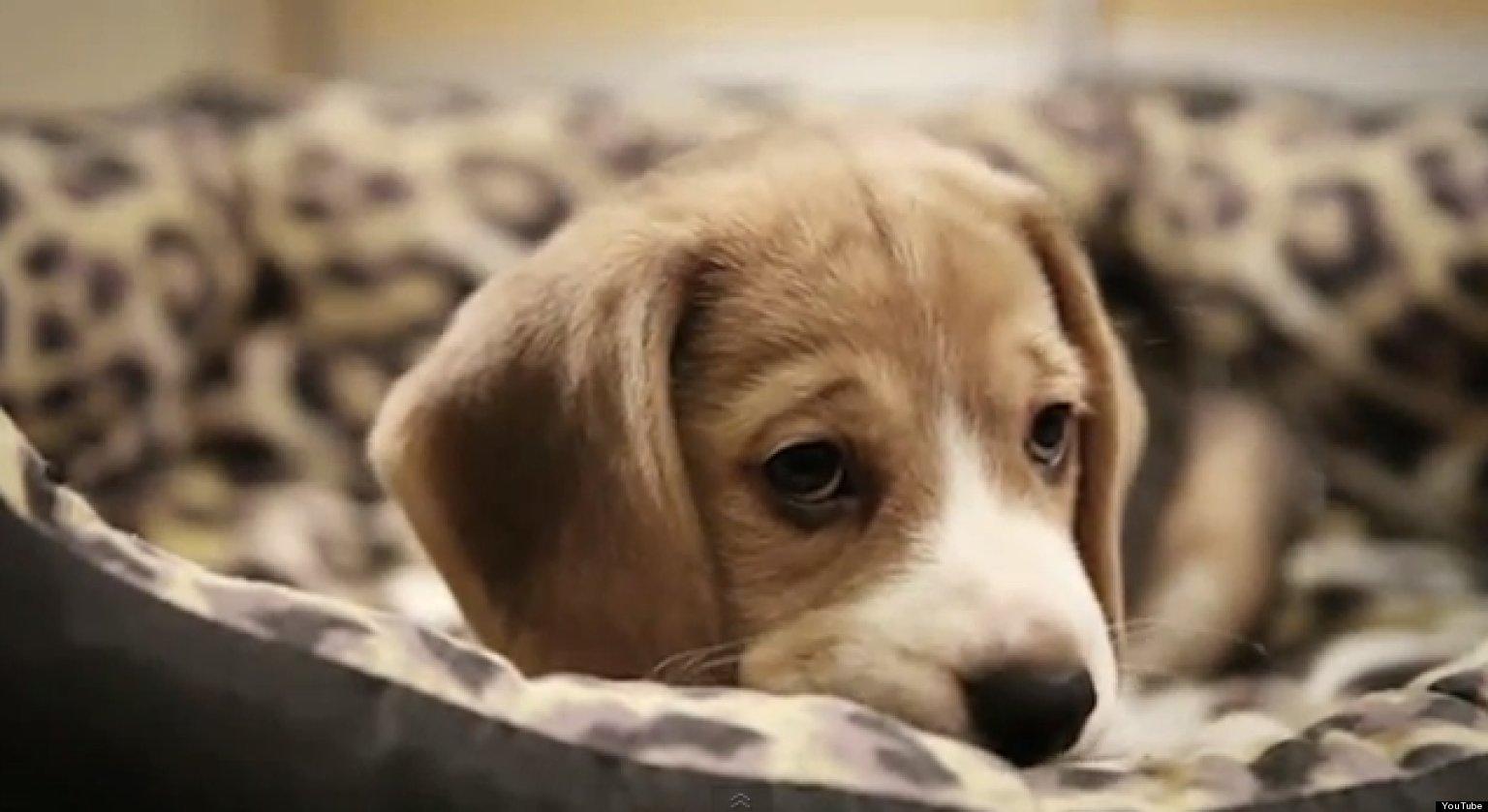 """Képtalálat a következőre: """"sad dog"""""""