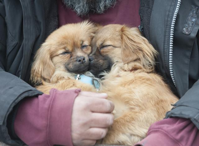 dog twins