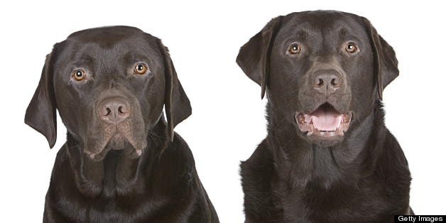 You can enter a competition to have your dog cloned