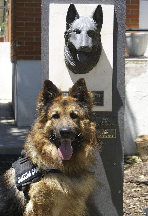 perro de la guardia civil medalla