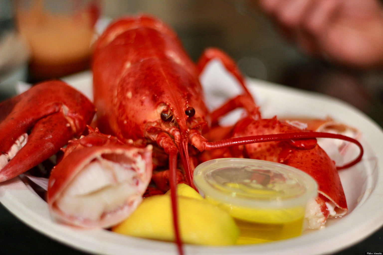 don't be scared it's just lobster  huffpost