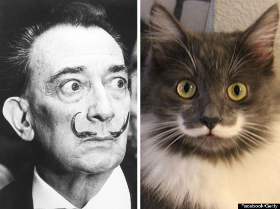 dali hamilton cat moustache