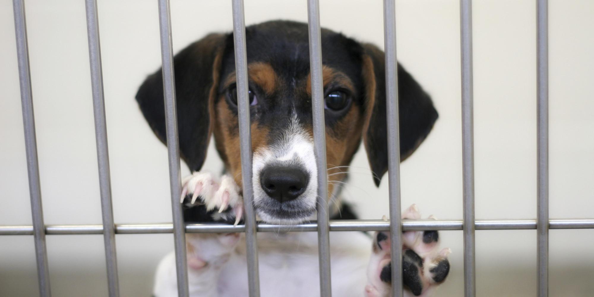 Ct Dog Adoption Rescue