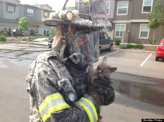 cat rescued by firefighter