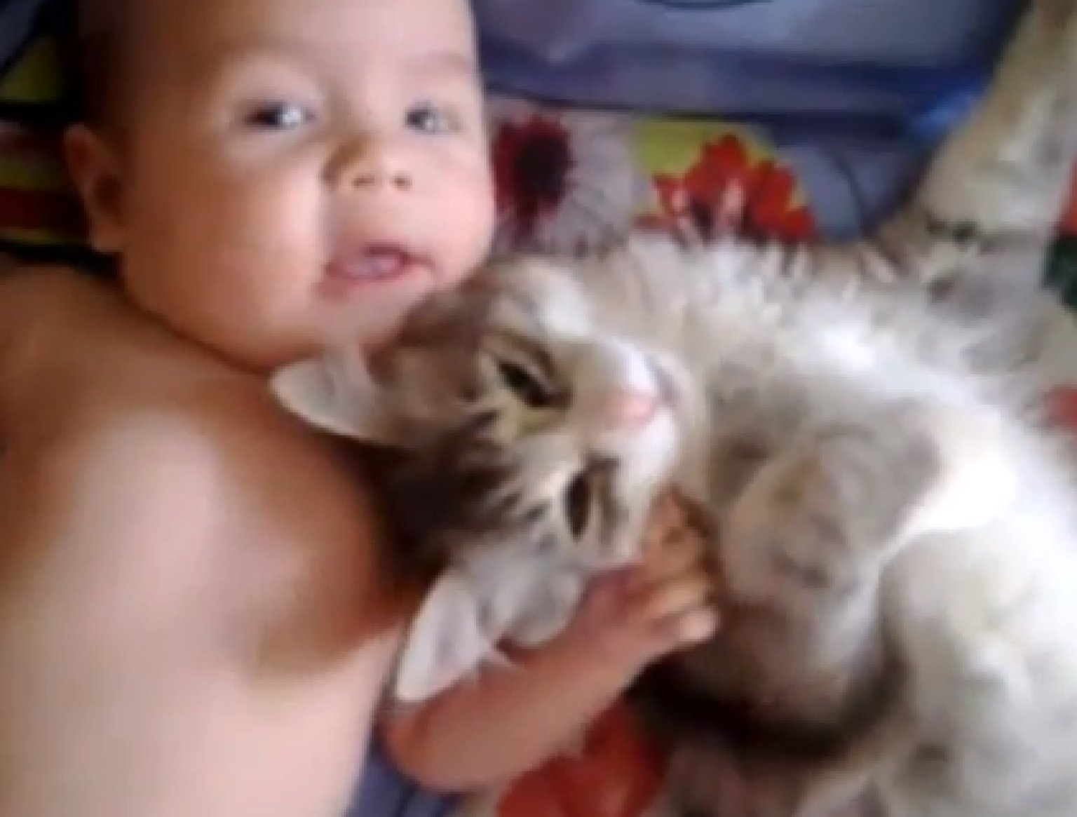 Cat Is pletely And Utterly In Love With Baby VIDEO