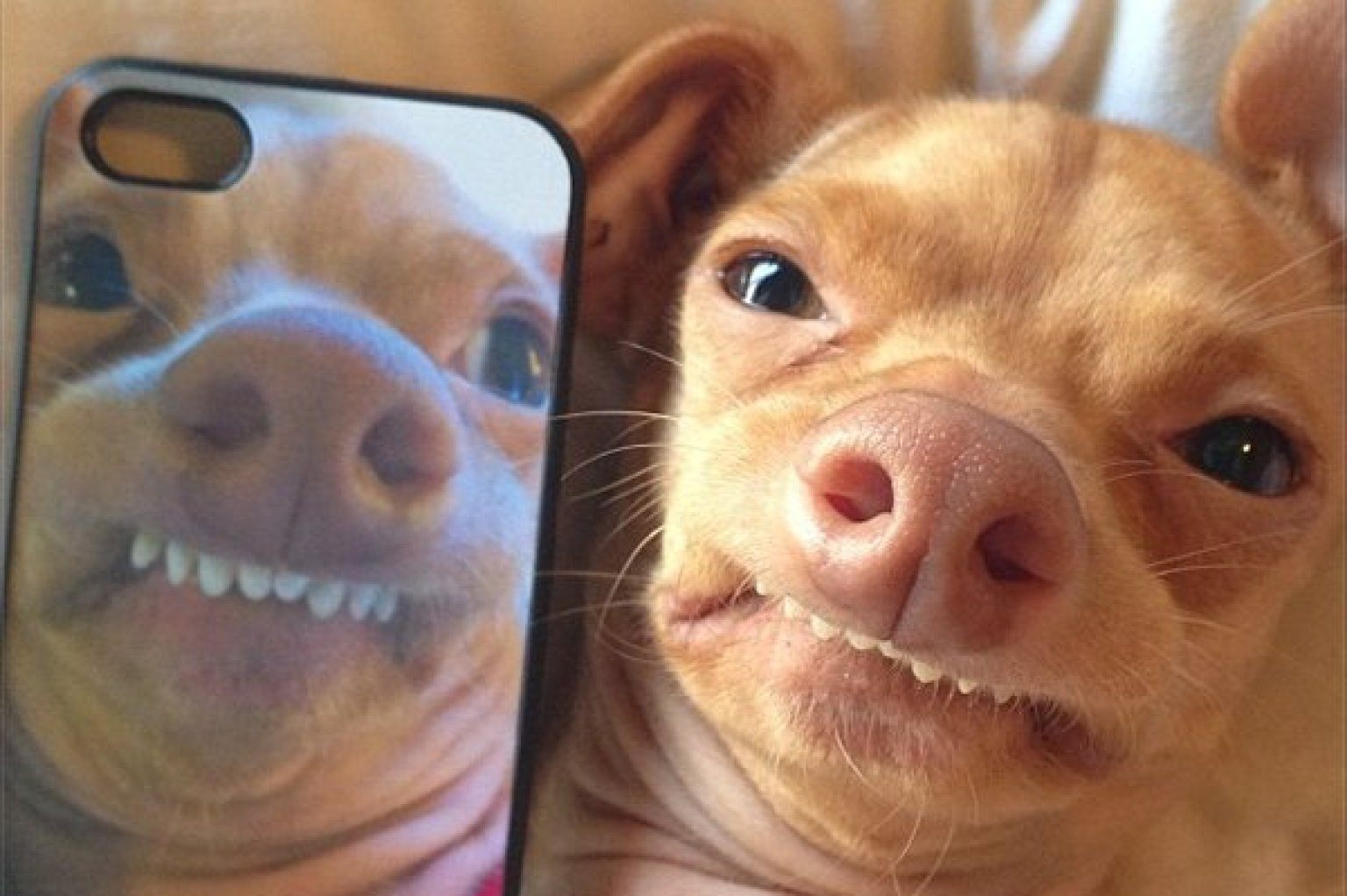 Tuna Dog Once Dumped By A Road Now Has 400k Instagram