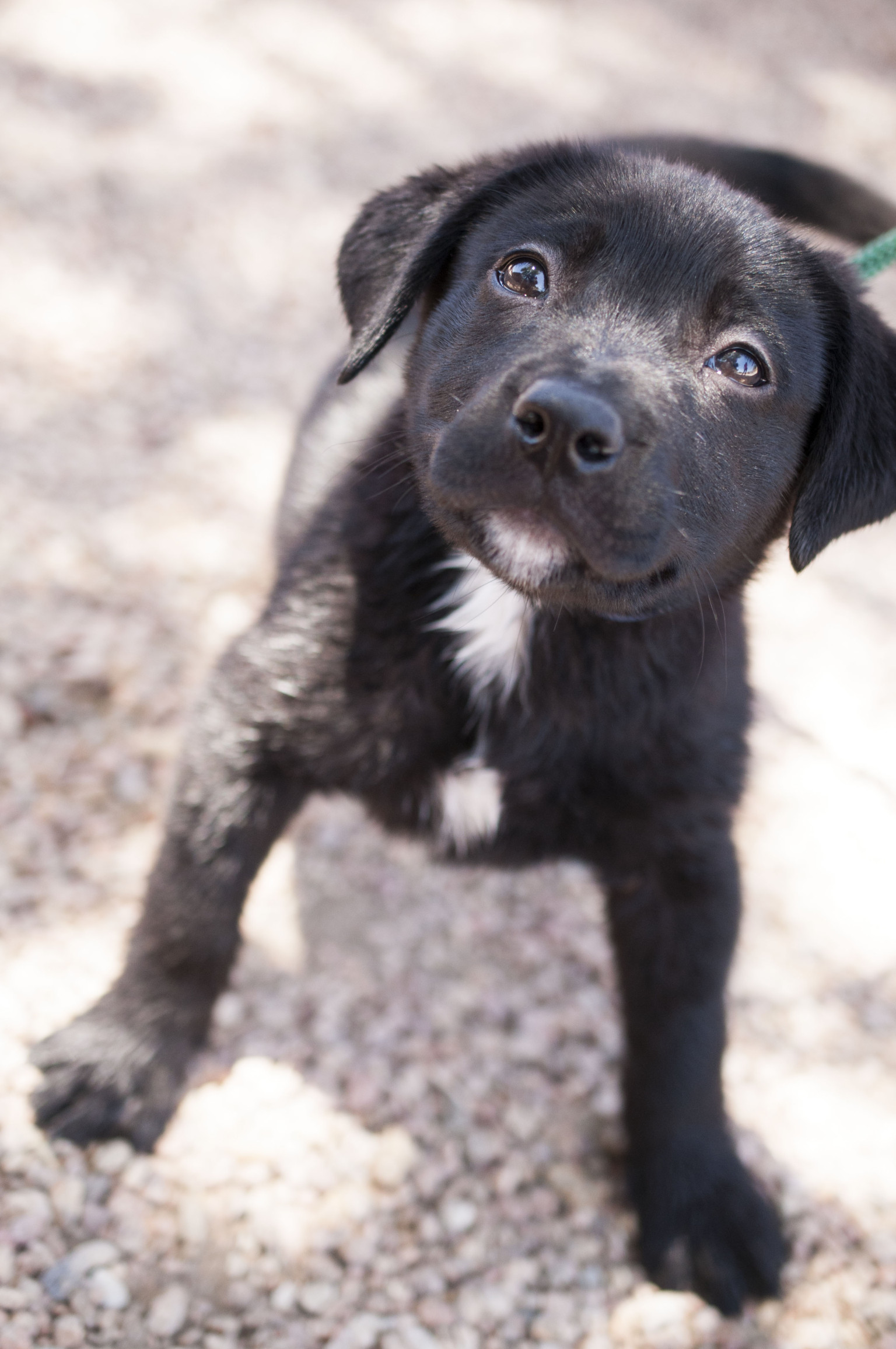 Adoptable Puppies This Week From Lifeline Puppy Rescue PHOTOS