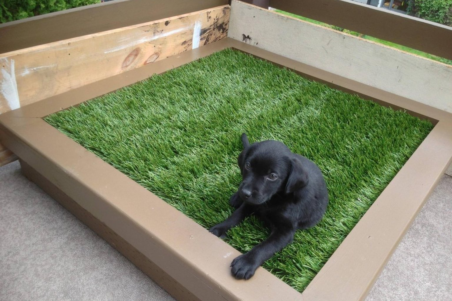 DIY Porch Potty Is The Ultimate Solution For City Dogs Or Lazy Pet Owners  (PHOTOS) | HuffPost